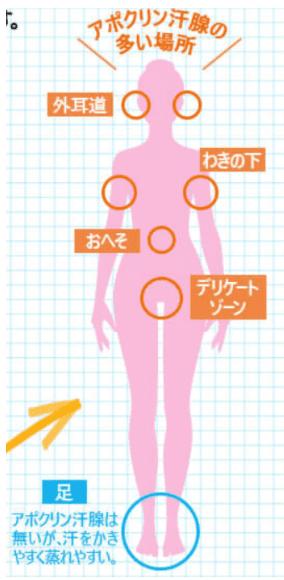 アポクリン腺の多い部分 体